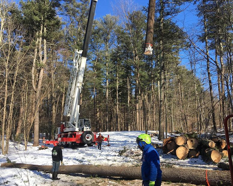 Tree Services Near Me Boxford, Lexington MA