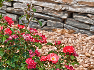 Landscape Design Halifax County VA - Mecklenburg County VA