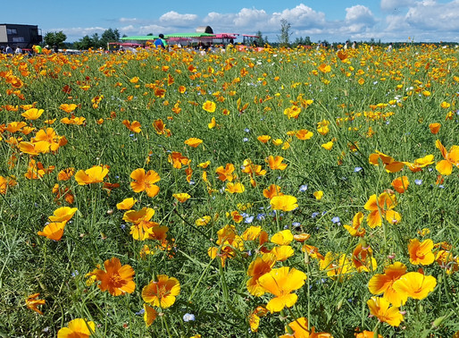Hokkaido: Itinerary for 9D8N Summer Road Trip