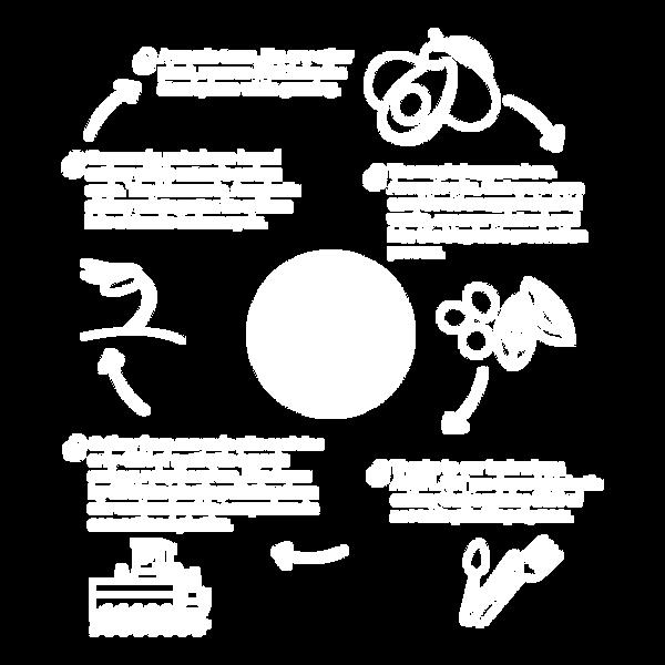 ciclo-de-vida2.png