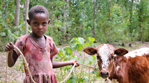 2014 Ethiopia girl with calf