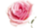 Pink%20Rose%20Wallpapers%207_edited.png