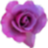 OIPLROWD5T6rose_edited.png