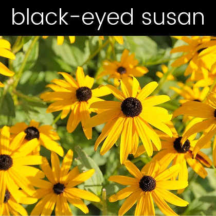 Black-Eyed Susan Candle