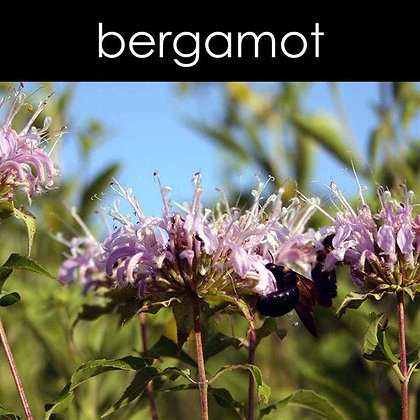 Bergamot Wax Melts