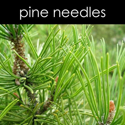 Pine Needles Candle - 8 oz White Tumbler