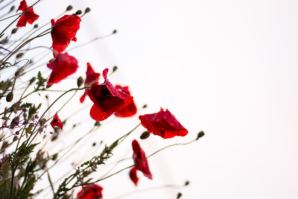 Why do we wear a poppy on Remembrance Day?