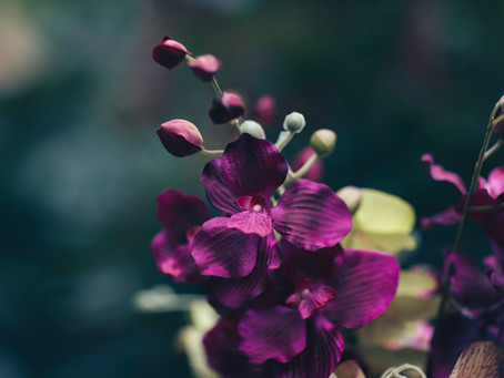 Access Care & The Orchid