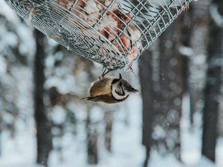 Make Bird Feeders This Christmas - How To Tutorial!