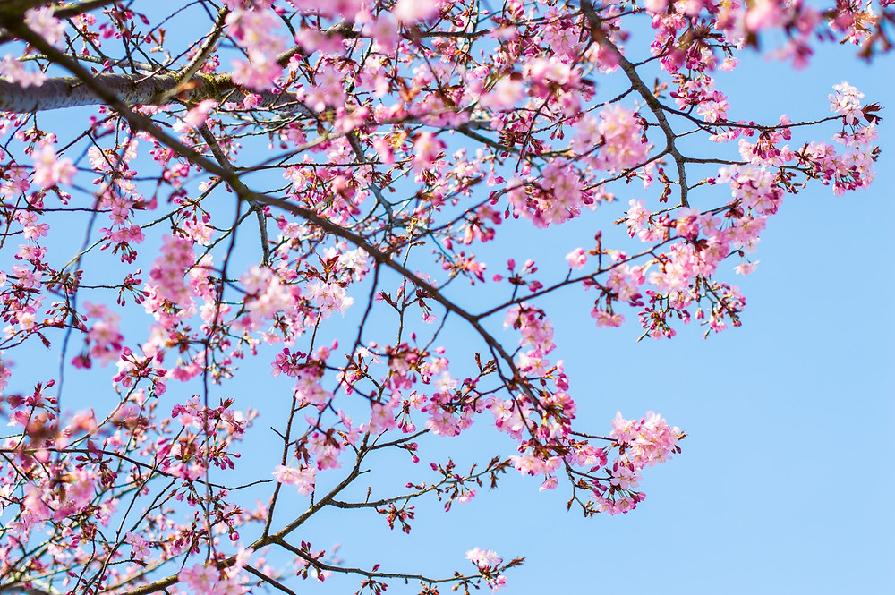 12 Things To Do In Spring | Access Care Live-in care