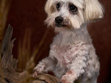Older Dog Photo Shoot