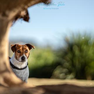 Kevin-Case-2021-06-26-Bayview-Dog-Park-2