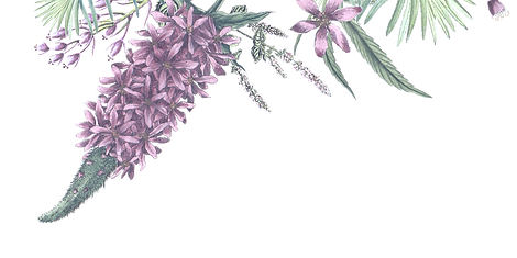 Illustrated%20Flowers%202_edited.png