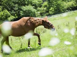 敷地内の馬