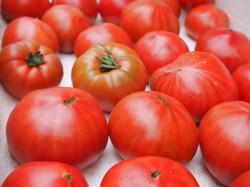 地元大島のトマト