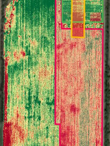 Corn - NDVI (Overlay)