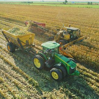 Mitzner Farms Seed Corn Harvest
