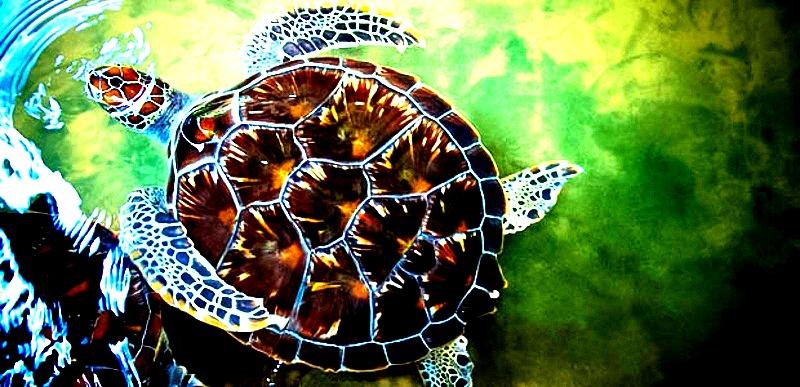 kosgoda-turtle-hatchery-4_edited