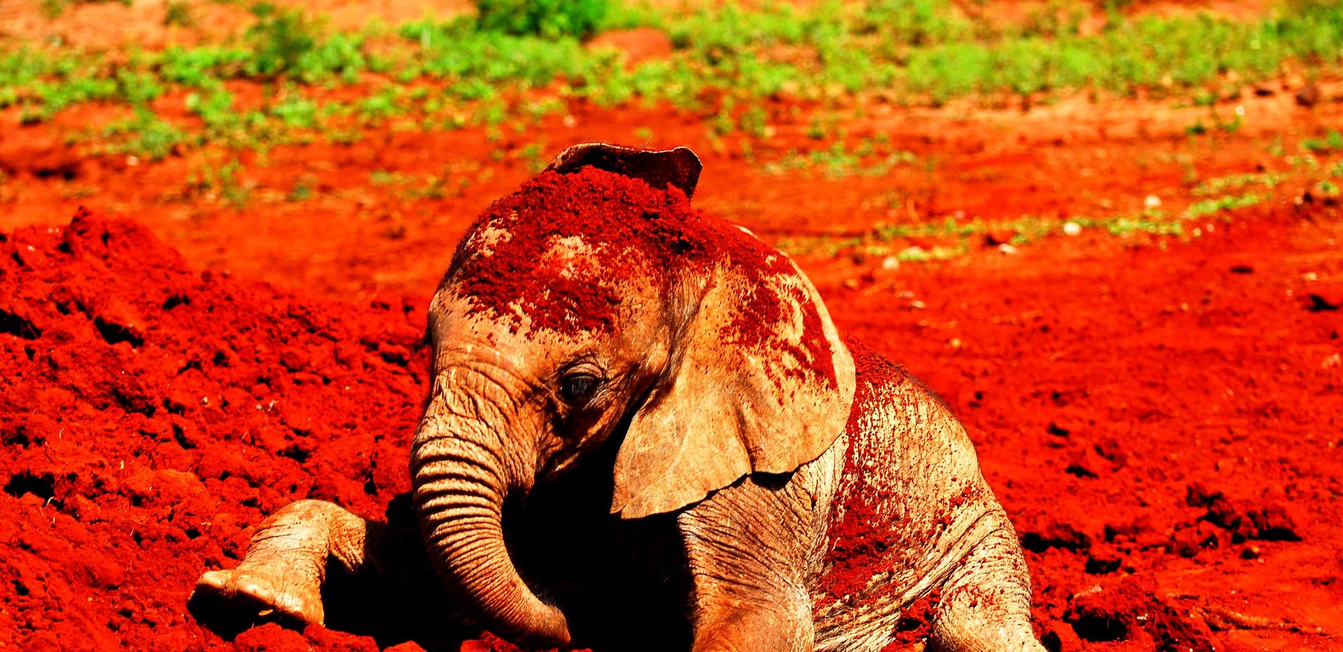 Feeding-baby-elephants-4744491_edited.jp