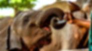 Elephant Feeding_edited.jpg