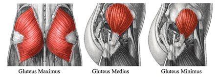 Gluteus images