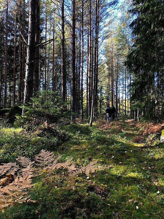 Skogsbild1.jpg