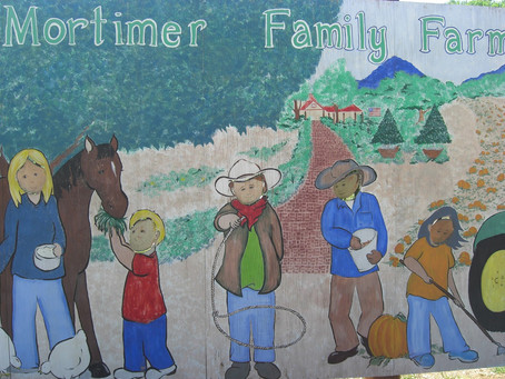 Looking For Some Family Fun This Weekend? Visit Mortimer Farms in Dewey, Arizona and Their Sweet Cor