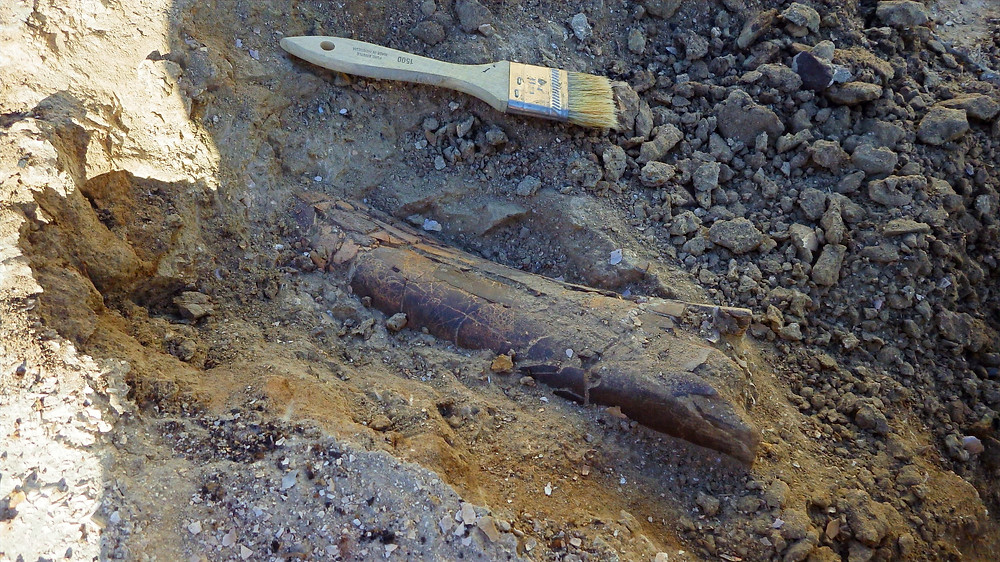 A dinosaur's long bone continues into the hillside.