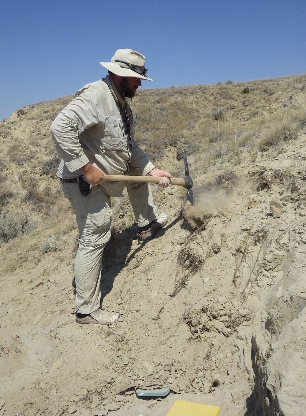 Site Manager Cory inspects the rock overburden above the dinosaur.