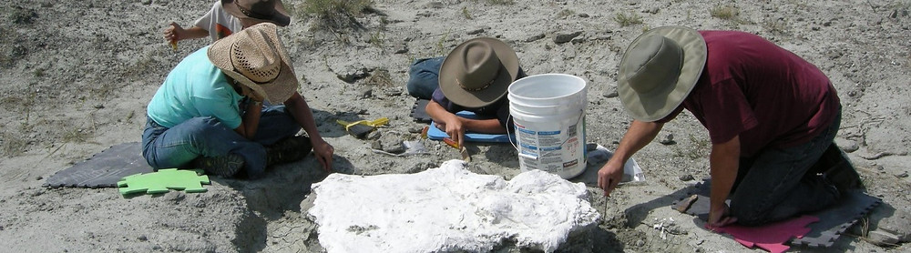 Montana Dinosaur Dig site with 3 people working on a fossil jacket