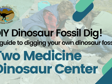 DIY Dinosaur Fossil Dig!