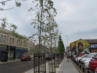 Trees, Buildings, New Chairman