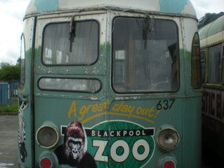 ANOTHER TRAM ANOTHER ZOO