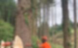 treemans 20t felling tree