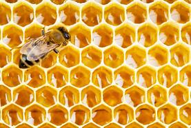 ミツバチ.png