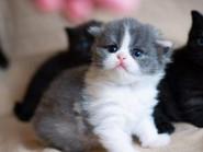 9 przyczyn łzawienia oczu u kota
