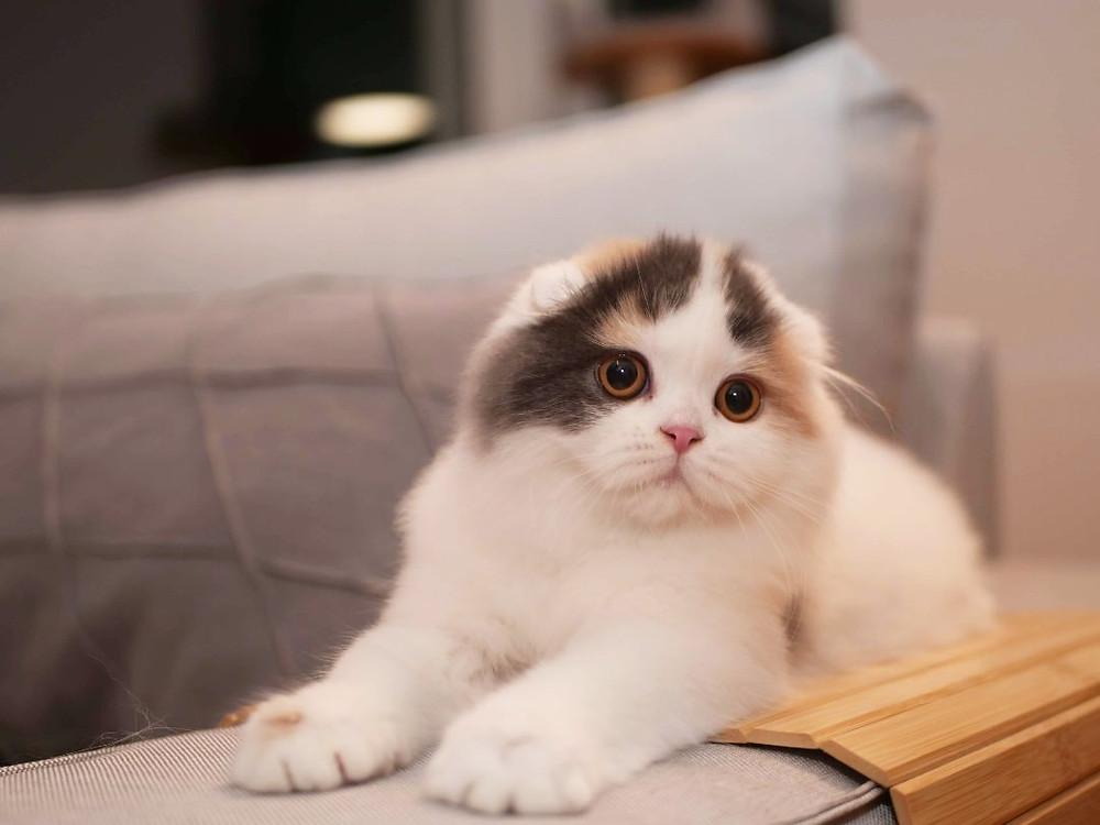 kot leży na kanapie