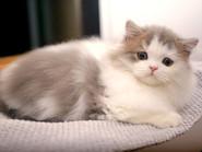 Kot pierwszy raz w domu – na dobry początek