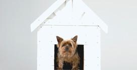 Los perros y la cuarentena: cómo ayudarlos a sobrellevarla