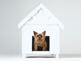 Your Pet, Your House - Secure