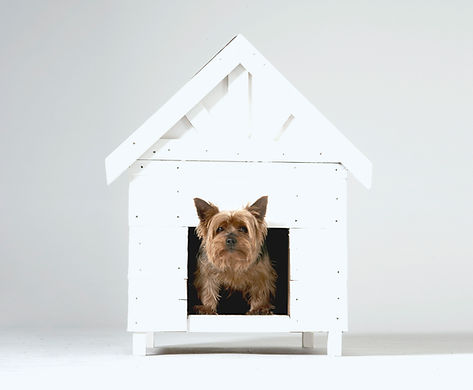 Dog coming out of his kennel for his pet sitter in Currumbin