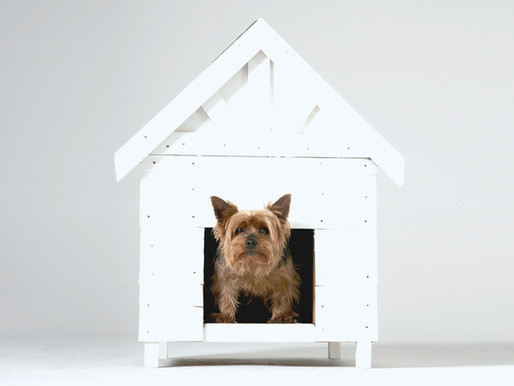 New Pet Coming Home? Tips and Tricks to Ease the Transition