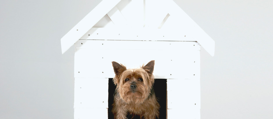 5 Things To Help Your Dog When It's Time To Move.