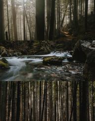 forest hike photo-set.jpg