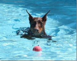 cayenne swim[1]