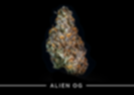 CREME Alien OG
