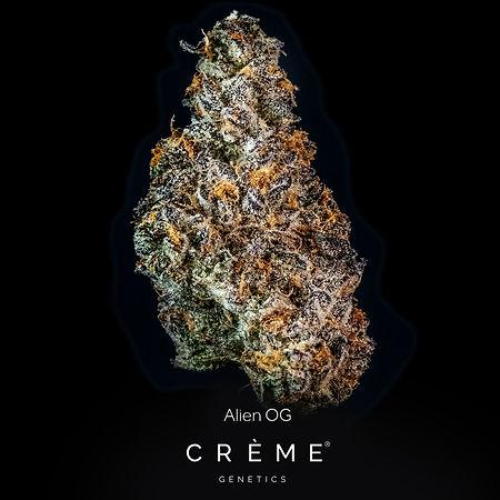 Crème Alien OG Flower