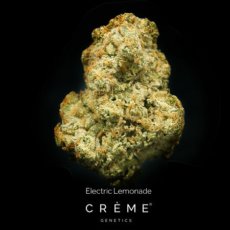 Crème Electric Lemonade Flower