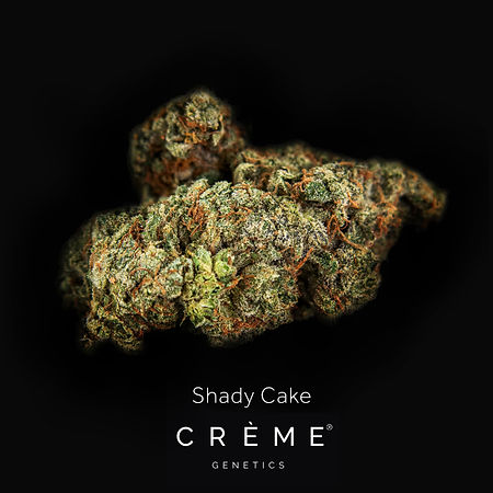 Crème Shady Cake Flower