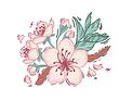 cherry blossom logo 02.PNG